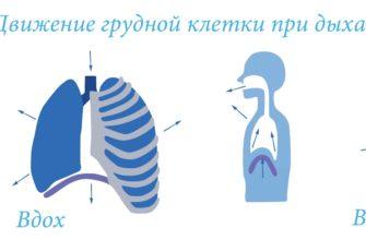 Йога: как правильно дышать. Как правильно дышать животом и диафрагмой
