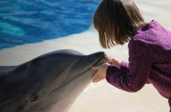 Почему не надо плавать с дельфинами