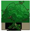 Хвойные деревья. Смолы. · ЖУРНАЛ «АГНИ ЙОГА и ТЕОСОФИЯ»
